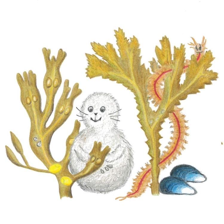 Noriko på äventyr i tången: Fucus serratus sågtång och Fucus vesiculosis blåstång
